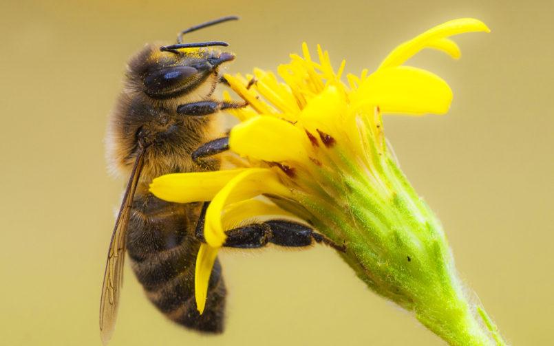KL DENTAL ist Bienenpate